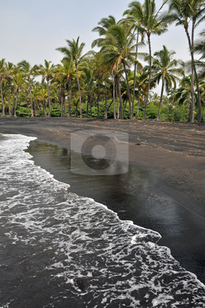 Black Sand Beach on the Island stock photo, A deserted black sand beach with tall palm trees by Jeff Clow