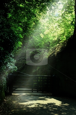 Shafts of Light stock photo, Eccleston chshire by Ray Roscoe