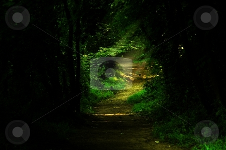 Pathway through the woods stock photo, Eccleston ferry pathway by Ray Roscoe