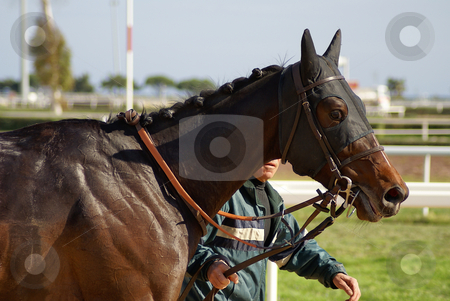 Winner stock photo, Horse before the race by Serge VILLA