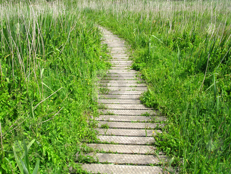 Wooden nature trail path. stock photo, Wooden nature trail path. by Stephen Rees