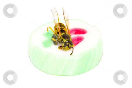 Wasp on a Candy stock photo, A common wasp on a piece of sweet candy - Vespula vulgaris by Petr Koudelka
