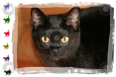 Evil Eyed Black Cat stock photo, Black Cat with skull and cross bone eyes by Debbie Hayes
