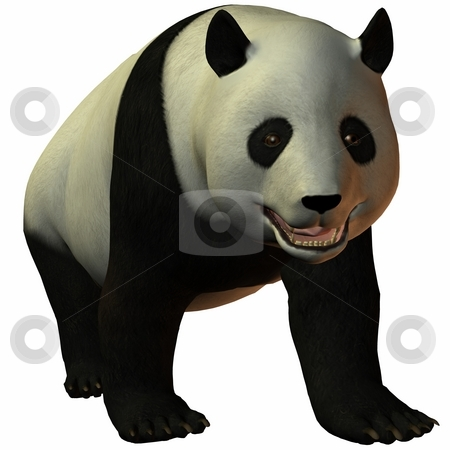 Toon Panda stock photo, 3D Render of an Toon Panda by Andreas Meyer