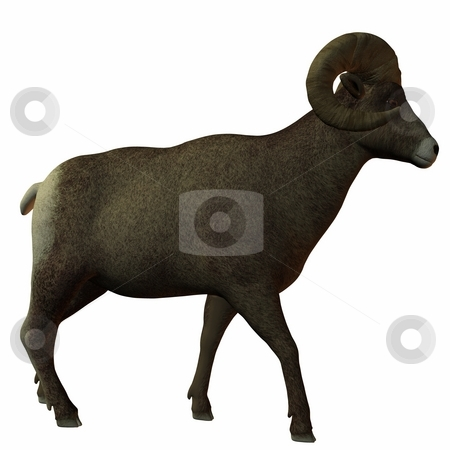 American Bighorn Sheep stock photo, 3D Render of an American Bighorn Sheep by Andreas Meyer