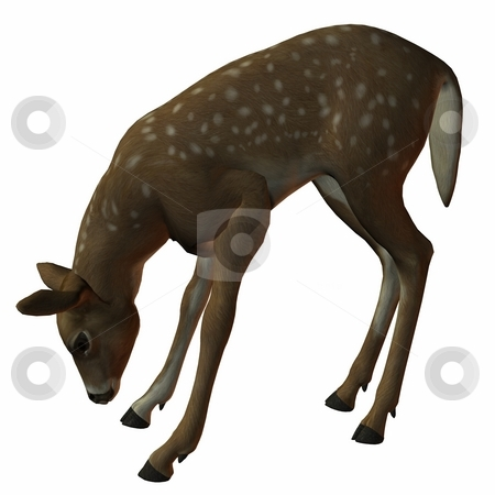 Fawn stock photo, 3D Render of an Fawn by Andreas Meyer