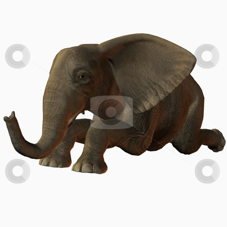 Baby Elephant stock photo, 3D Render of an Baby Elephant by Andreas Meyer
