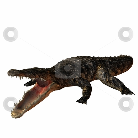 Crocodile stock photo, 3D Render of an Crocodile by Andreas Meyer