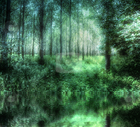 HDR Mystical Woods stock photo, Composite image of two HDR photos. Effects added to create a mystical atmosphere. Surreal, dreamy impression of a forest in the summer and reflection in water. by Karen Koomans
