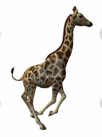 Giraffe stock photo, 3D Render of an Giraffe by Andreas Meyer