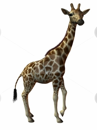 Giraffe stock photo, 3D Render of an Giraffe by Andreas Meyer