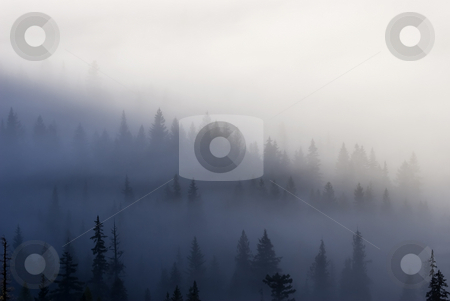 Piercing the Veil stock photo, The tallest trees of the Wenatchee NAtional Forest peirce the low clouds and mist as the sun rises on a crisp October Day. by Mike Dawson