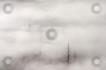 Standing Tall stock photo, A few tall trees standing tall among the rising mist and fog of a crisp OCtober Morning in th Wenatchee National Forest in Washington by Mike Dawson