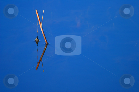 Simple Beauty stock photo, Sometimes the simplest things can beautiful in nature. A broken branch protudes through the still waters of a local pond. The symetry of the reflection and the reflected glow of the blue sky above caughte my eye! by Mike Dawson