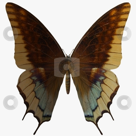 Butterfly stock photo, 3D Render of an Butterfly by Andreas Meyer