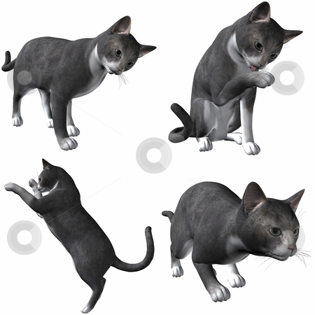 Cat stock photo, 3D Render of an Cat by Andreas Meyer