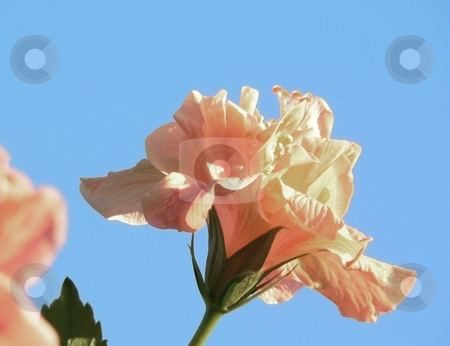 Floral stock photo,  by Perry Correll