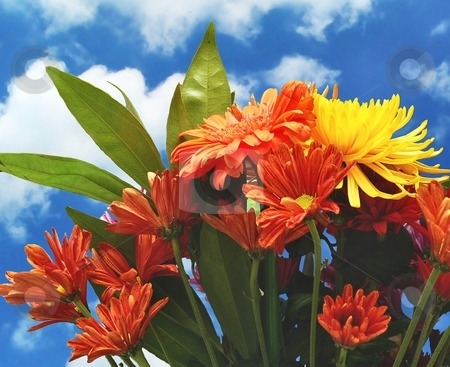 Boquet stock photo, Bright flower bouquet with blue sky by Perry Correll