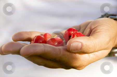 Hand holding wild cherries stock photo, Person holding wild cherries in her hand before her body. Shallow DOF by Claudia Van Dijk