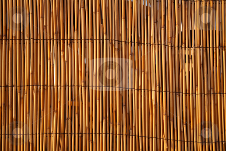 Close up of a bamboo fence, lit by warm evening sunlight. stock photo, Close up of a bamboo fence, lit by warm evening sunlight. by Stephen Rees