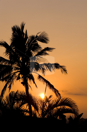 Palm tree silhouette early morning stock photo, Silhouette of a palm tree against the early morning sun. by Nicolaas Traut