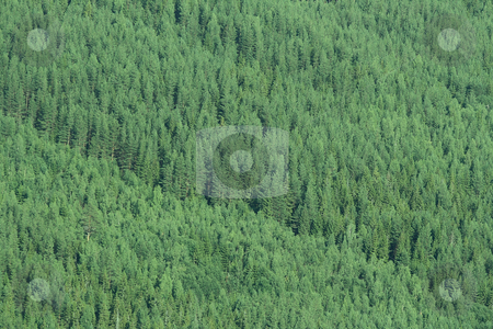 Forest stock photo, Green forest with lots of trees by Kjell Westergren