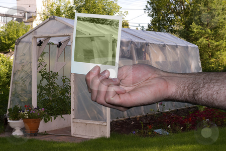 Greenhouse stock photo, A personal greenhouse full of plants with a polaroid of the roof by Richard Nelson