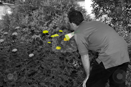 Adding Color To Life stock photo, A young gardener using a paintbrush to paint his flowers yellow by Richard Nelson