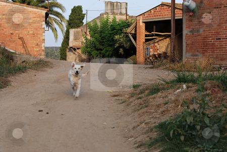 Happy dog stock photo, Running happy dog by Gady Cojocaru
