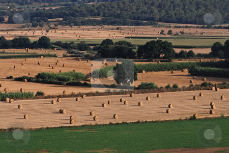 Landscape in Catalonia  stock photo, Agriculture in Catalonia by Gady Cojocaru
