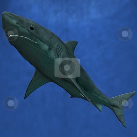 Great White Shark stock photo, 3D Render of an Great White Shark by Andreas Meyer