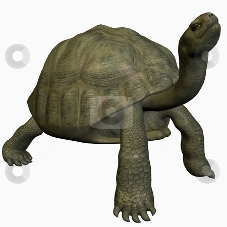 Galapagos Tortoise stock photo, 3D Render of an Galapagos Tortoise by Andreas Meyer