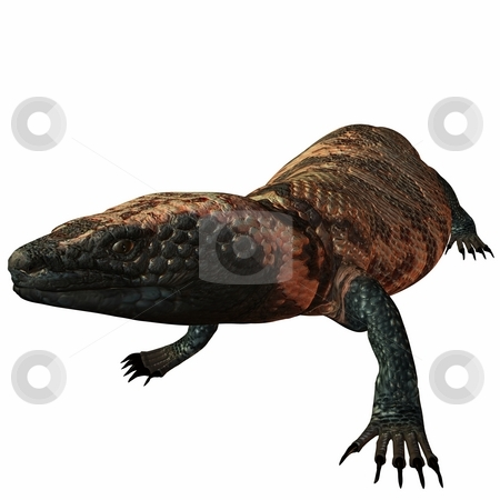 GilaMonster-Heloderma suspectum stock photo, 3D Render of an GilaMonster-Heloderma suspectum by Andreas Meyer