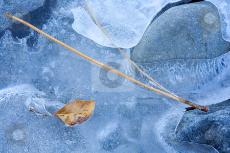 Left on the Ice stock photo, Autumn leaves and a pine needle left on the ice frozen along the Tieton River by Mike Dawson