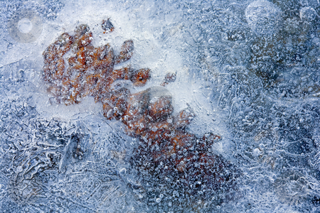 What lies Beneath stock photo, A pine cone trapped beneath the ice along the Tieton River by Mike Dawson