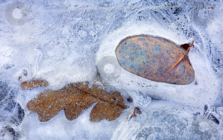 Autumn Frozen stock photo, An Autumn leaf frozen into place alongside a colorful stone in the Tieton River by Mike Dawson