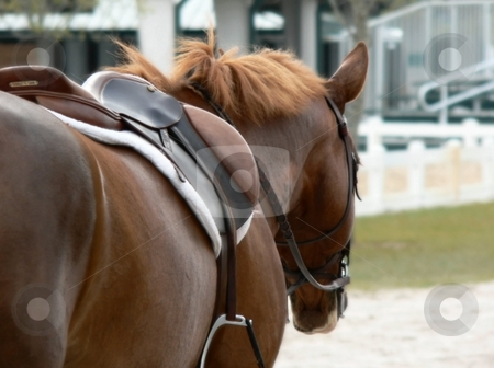The Horse stock photo, Horse photo by Perry Correll