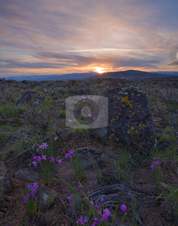 Grass Widow Sunset stock photo, Grass Widows dot the hills above Cowiche Canyon as the sun sets on a cool MArch Day. by Mike Dawson