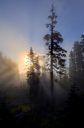 Wilderness Inspiration stock photo, Fog rising out of the valley's obsucring the rising sun and casting sunbeams down to the forest floor near the PAcific Crest in Washington by Mike Dawson