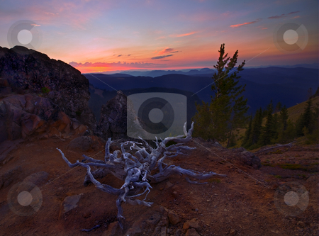 Left for Dead stock photo, A gnarled and dead root system lies atop a ridge just East of the Pacific Crest as the sun sets. I suspect someone drug it to this spot with the idea of a camp fire but thought better of it. by Mike Dawson