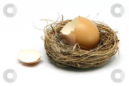 Broken egg in nest stock photo, Broken egg in nest isolated on white background by EVANGELOS THOMAIDIS
