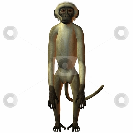 Monkey stock photo, 3D Render of an Monkey by Andreas Meyer