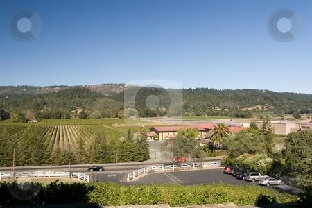 Napa winery stock photo, Vineyard in the wine growing region of Napa, California. by Mariusz Jurgielewicz