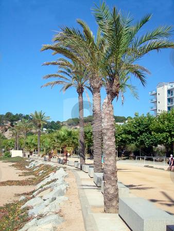 Calella Promenade Spain stock photo, Palm trees on beach promenade in resort of Calella on Costa Brava Spain. by Martin Crowdy
