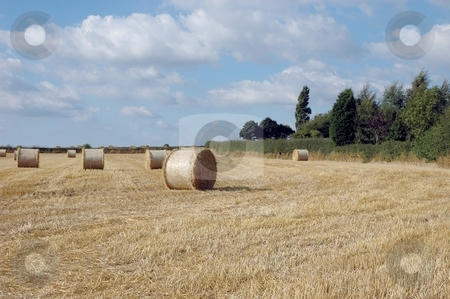 Bales of Hay stock photo, Norcott Fields by Ray Roscoe