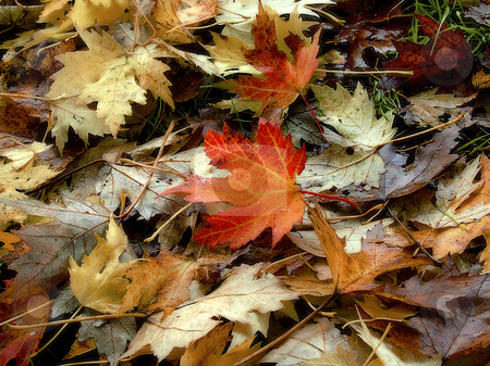 Autumn leaves stock photo, Beautiful autumn leaves on the ground. by Juliet Photography