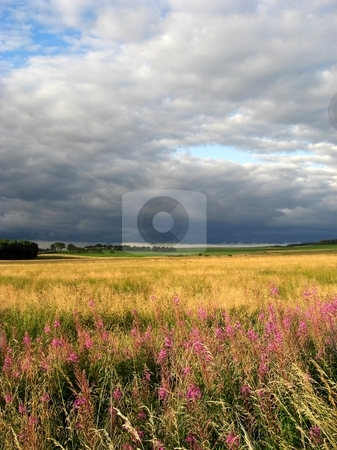Summer meadows stock photo, Summer meadow in the late afternoon light. by Juliet Photography
