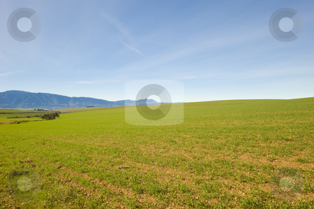 Green Winter fields with blue skies stock photo, Green fields during Winter with blue skies. by Nicolaas Traut