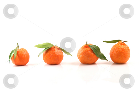 Four mandarins front stock photo, Four mandarin front view with small reflection isolated on white background fruits and agriculture conceptts by EVANGELOS THOMAIDIS