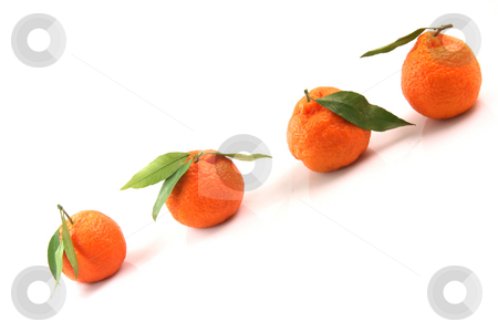 Mandarins with copy space stock photo, Four mandarin front uper diagonal view with copy space isolated on white background fruits and agriculture concepts by EVANGELOS THOMAIDIS